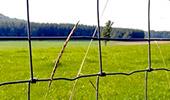Accessoires pour clôtures électriques anti-sangliers