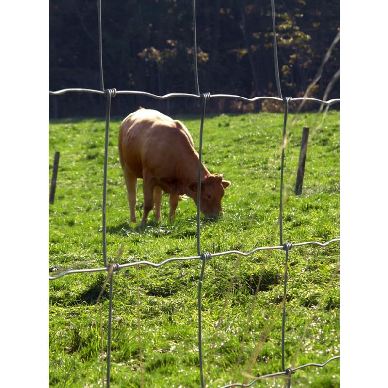 Grillage Prairie Medium 80 cm / 50M à Mouton
