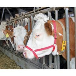 LICOL DE PRESENTATION rouge pour bovins