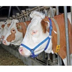 LICOL DE PRESENTATION bleu pour bovins