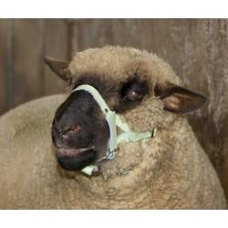 LICOL pour Mouton en Cuir blanc