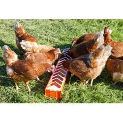 MANGEOIRE Poules en PVC orange 12x75cm
