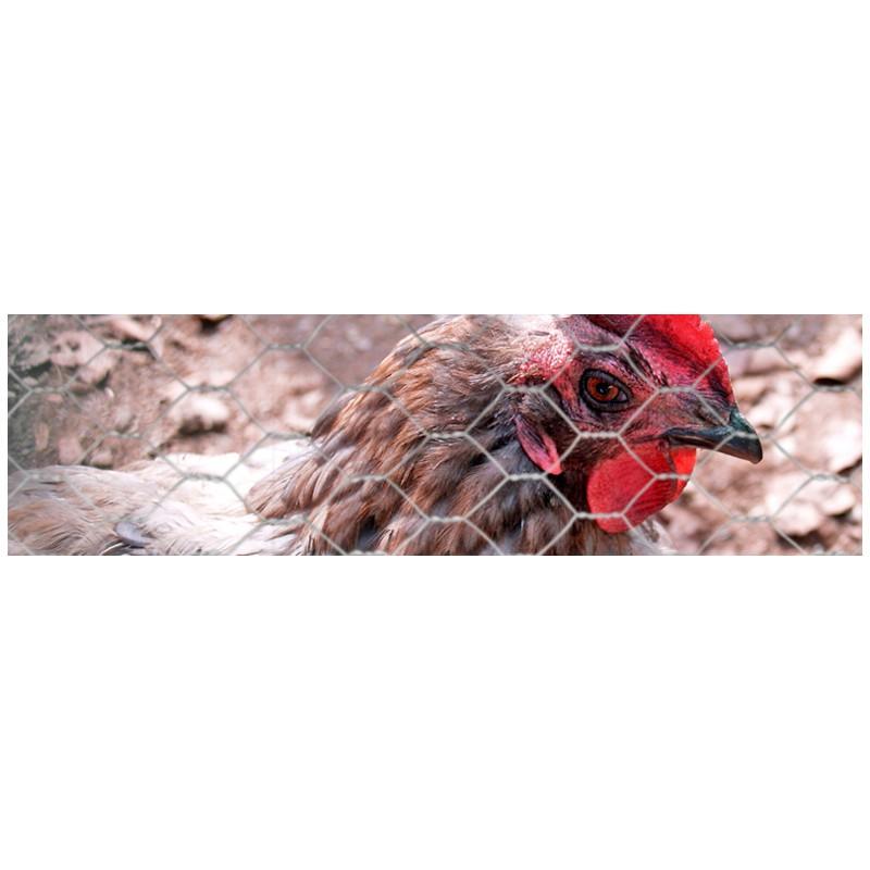 grillage galvanis poules volaille lapins m 40mm h 1m50. Black Bedroom Furniture Sets. Home Design Ideas