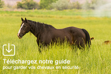 Téléchargez notre guide de choix de clôture électrique pour chevaux