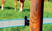 Fils conducteurs pour clôtures électriques anti-sangliers